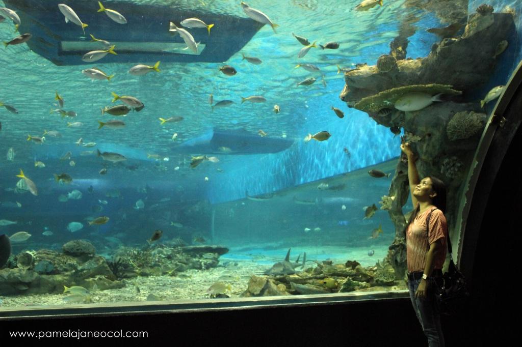 Ocean Park - Manila
